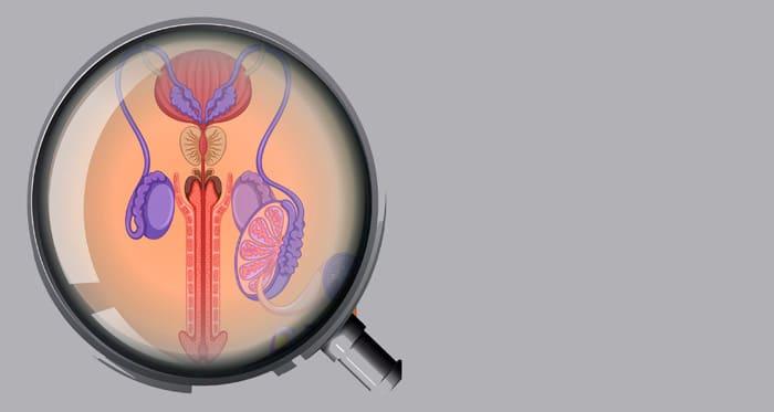 genitales mov Enfermedades